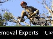 tree-removal-brisbane